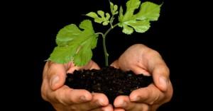 plantando_arbol